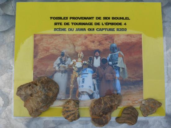 fossiles star wars